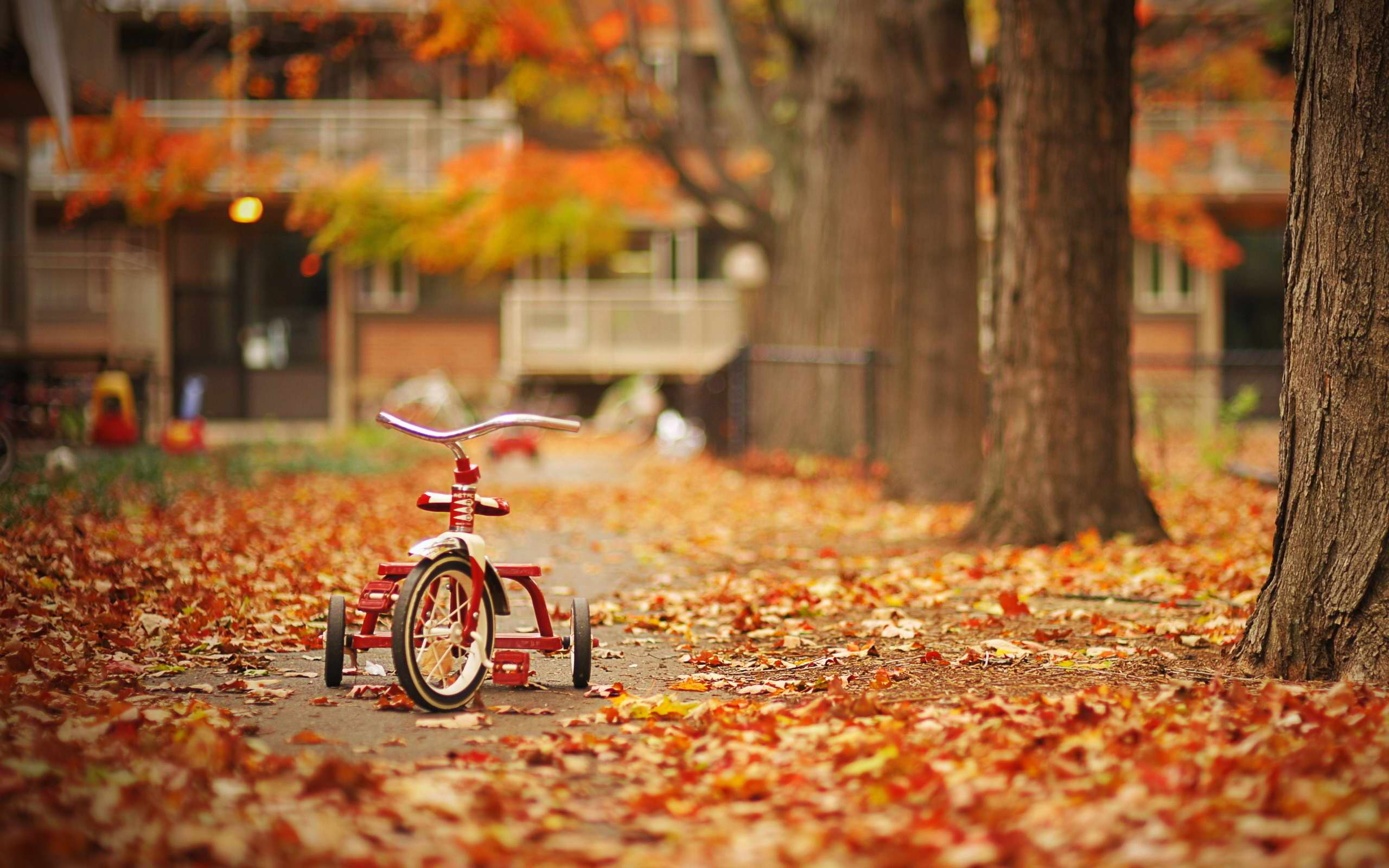 Osam razloga da dete provede napolju sat vremena svakog jesenjeg dana