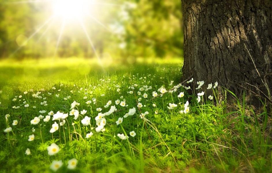 Sunce – čuvar našeg zdravlja